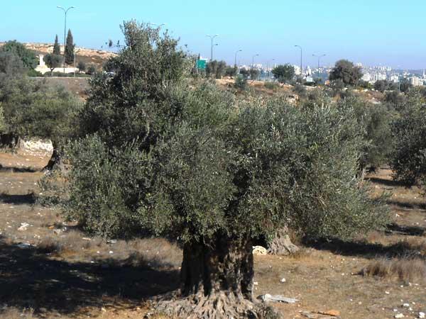 סיור - משולש ברמודה של ירושלים