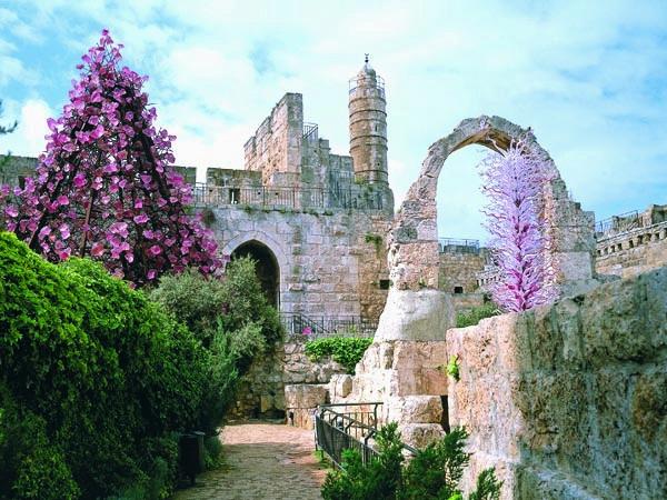 החזיון האור קולי במגדל דוד